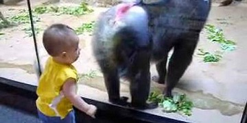 Baby Unfazed By Intimidating Baboon